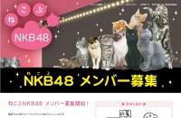 ねこぶNKB48