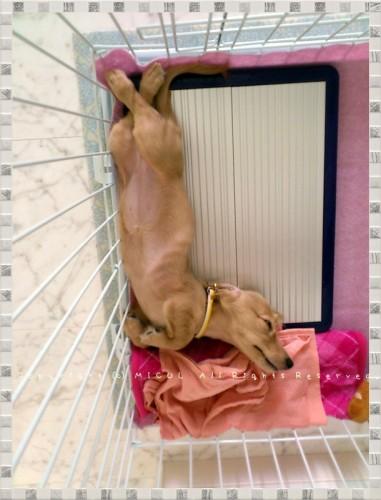 いおん寝顔