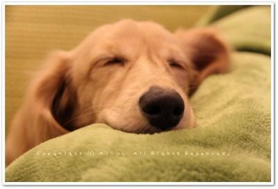 イオン寝顔